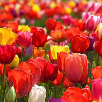 Bunte Farben im Frühling