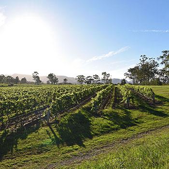 Weinregion Hunter Valley Australien