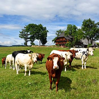 Landschaft im Schwarzwald mit Bauernhof