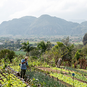 Berge von Vinales Kuba