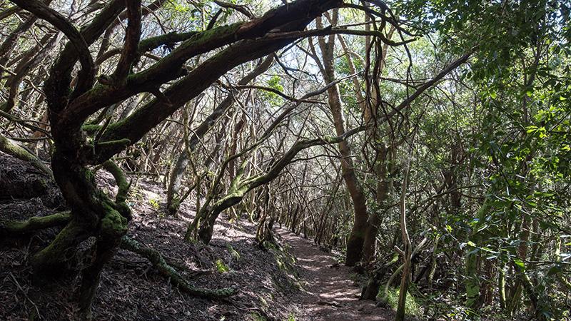 Wanderung durch den Lorbeerwald