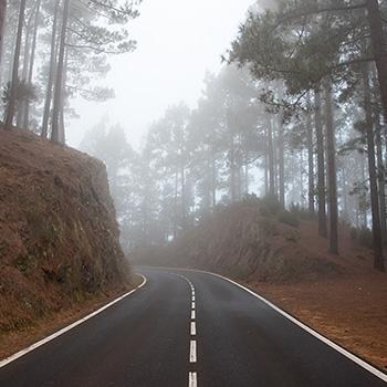 Nebelwald auf Teneriffa Spanien