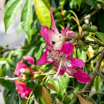 Fotos Botanischer Garten Funchal Madeira