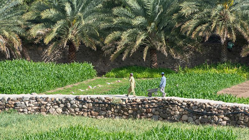 Feldarbeiter auf einer Plantage