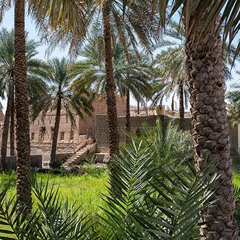 Palmengarten in Birkat al Mouz
