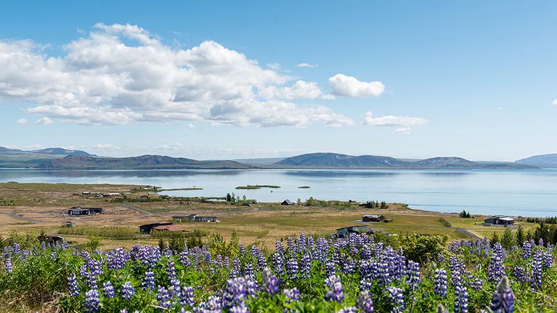 Blick auf den See im Thingvellir Nationalpark