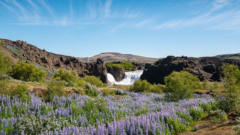 Hjalparfoss Wasserfall Island