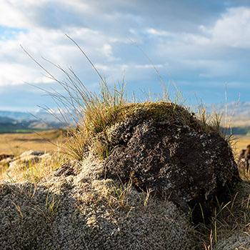 Vermooster Stein in Island