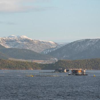 Schwimmende Fischfarmen in Norwegen