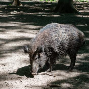 Fotos Wildpark alte Fasanerie Hanau