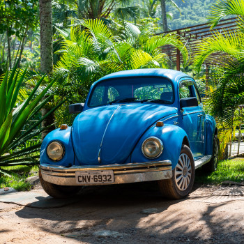 VW Käfer im Regenwald