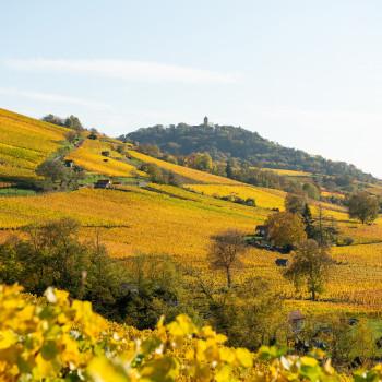 Herbstwanderung in den Weinbergen bei Heppenheim