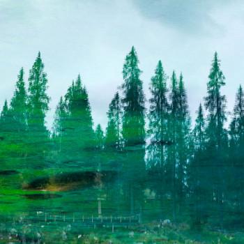 Baumkronen im Karersee