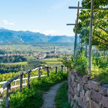 Apfelplantage mit Talblick in Südtirol