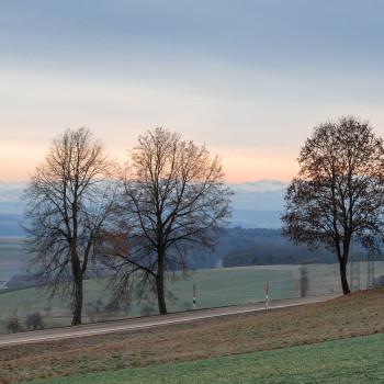 Bäume und das Alpenglühen