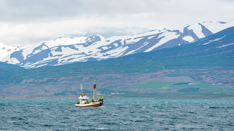 Whale Watching Tour in der Bucht von Akureyri