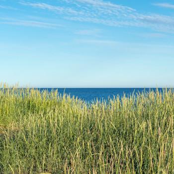 Dünengras mit Meer