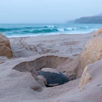 Meeresschildkröte am Strand von Ras Al Jinz