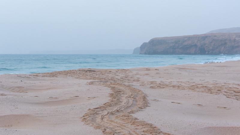 Schildkrötenspur im Sand