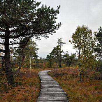 Naturpark schwarzes Moor in der Rhoen