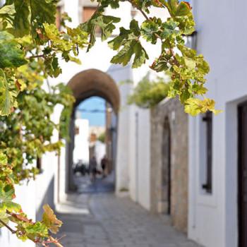 Weinranke in Lindos auf Rhodos