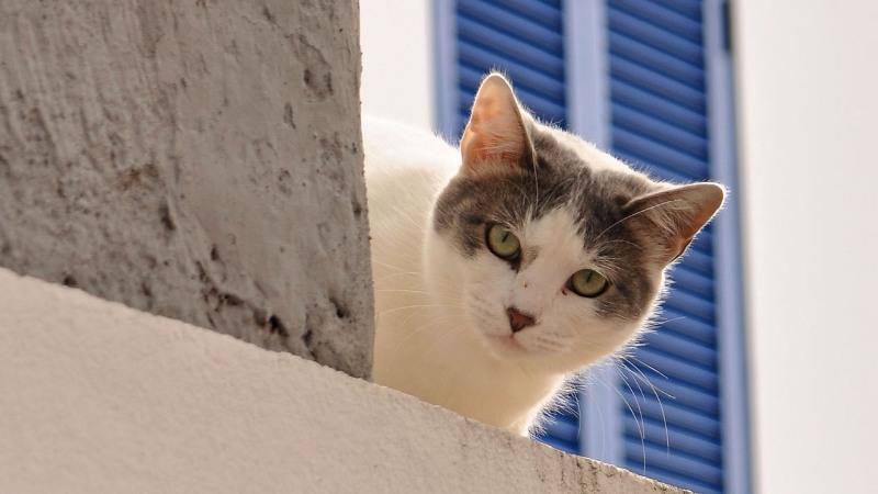 Weiße Katze auf Madeira