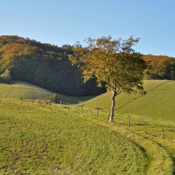 Herbstbild Waldrand