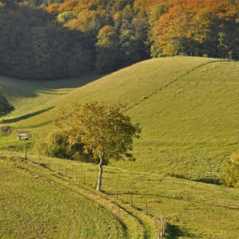 Herbstbild Wald und Wiese