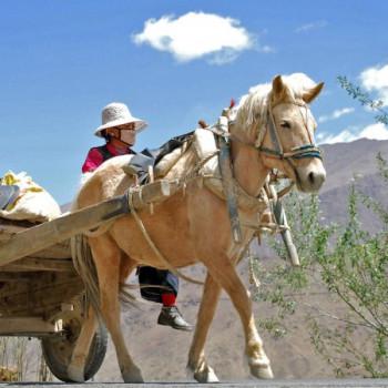 Tibeterin in einer Pferdekutsche auf der Straße