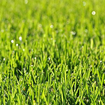 Grünes Gras auf unserem Rasen
