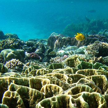 Unterwasser-Fotografie in Aegypten El Quseir