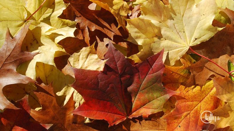 Schönes Herbstbild mit Laub