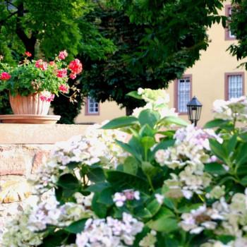 Blumen im Garten von Schloss Vollrads im Rheingau