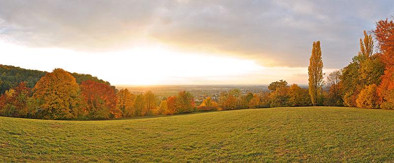 Goldener Herbst an der Hessischen Bergstrasse