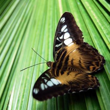 Schmetterling auf der Insel Mainau am Bodensee