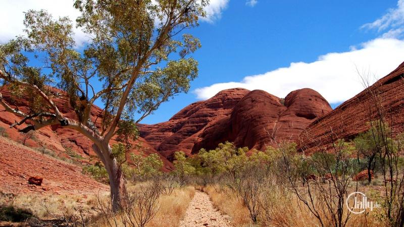 Wallpaper Valley of the Wind Walk - Olgas Australia