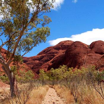 Hintergrundbild Valley of the Wind Walk - Olgas Australien